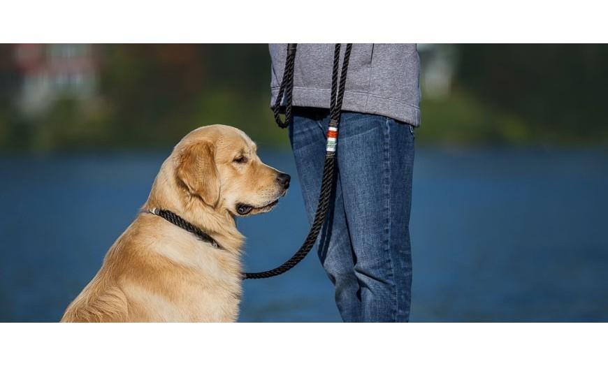 Pour chiens