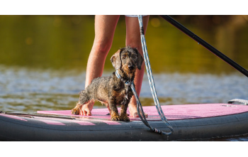 Pets on board: Cruising with your dog